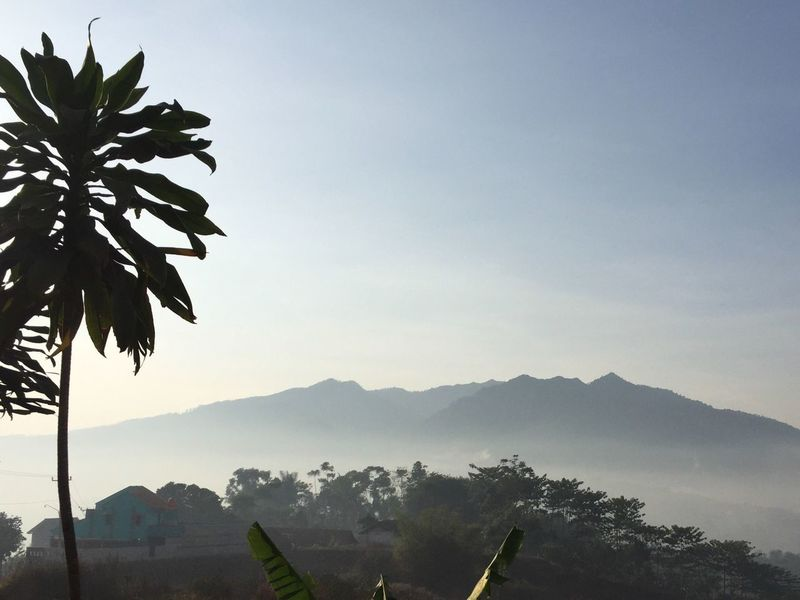 Cilembu Mountain taken by Haris Maulana in Sumedang, West Java, Indonesia Tree Plant Mountain Range EyeEmNewHere EyeEmNewHere EyeEmNewHere