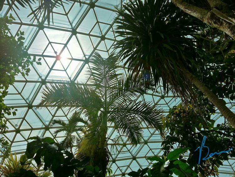 Segmented Atmosphere Greenhouse Tropical Trees Biodome