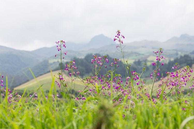 Flowers Growing On Field Against Sky