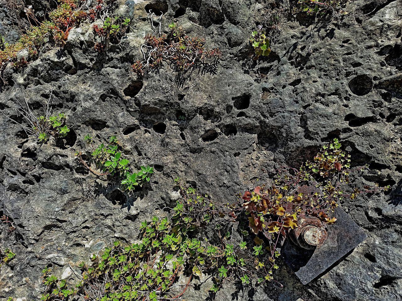 HIGH ANGLE VIEW OF PLANTS ON ROCKS