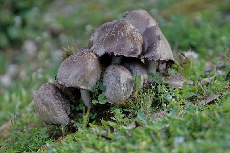funghi matti