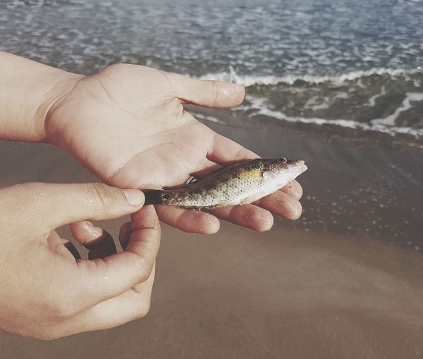 Close-up of hand holding leaf at beach