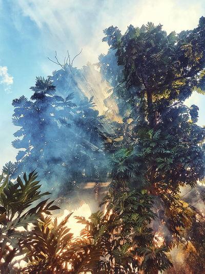 Sunrays Smoke