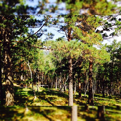 Green nature. Trees 🌲🌳🌿🍀🍄 Forest