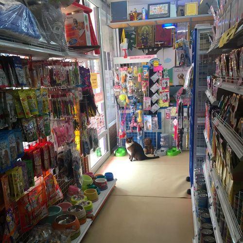 Shopkeeper cat
