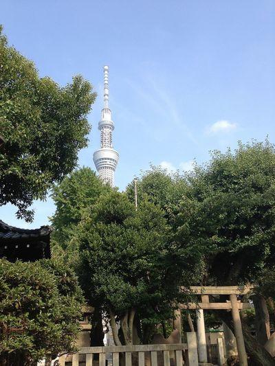 Tokyo sky three