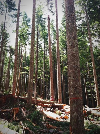 Painted Trees Logging Logging Site Thinning Healthy Forests Forest Mountains Trees Trees And Sky Isolated Wilderness The Color Of Business