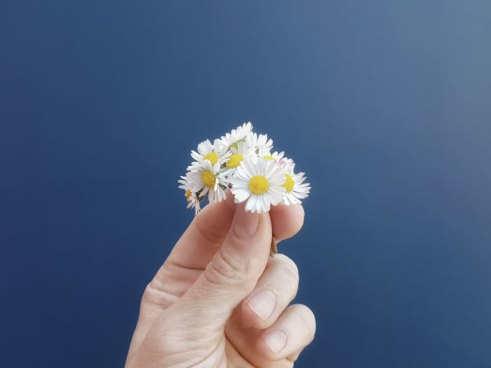 Red zone italia day twentyeight - close-up of hand holding white daisy against blue sky