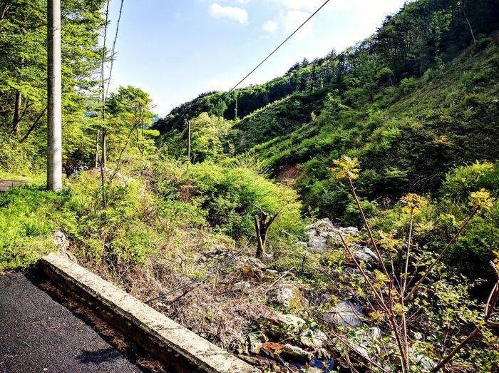 백운산 Enjoying Life Hicking Mountain View Relaxing Exersice....go..go...! First Eyeem Photo