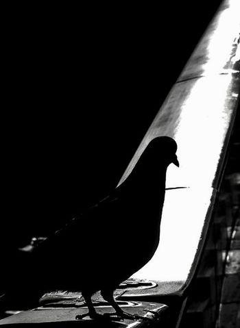 One Animal Bird Silhouette No People Animal Themes Animals In The Wild Animal Wildlife