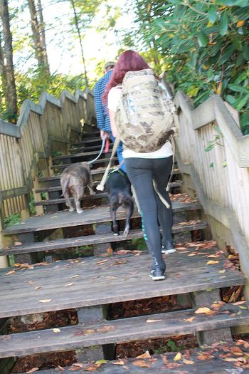 Crazy Dog Lady 🐾 Don't Bully My Breed Adventures Of A Dirty Barefoot Hippie Wild&wonderful Mountainmomma Pets Backpacking Black Waterfalls Breathing Space Summer Exploratorium