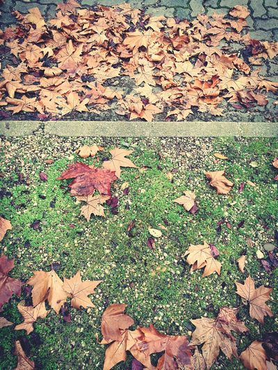 Backgrounds Full Frame No People Outdoors Nature Day Pavement Pavement Patterns Leaves Winter Wintertime Natural Pattern Grass And Leaves Pavement And Leaves Nature Patterns Fallen Leaves Cobblestones Cobblestone Pavement Curb OpenEdit