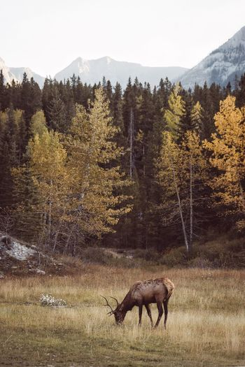 Oh deer. Canada Animal Themes Tree Mammal Nature Field No People One Animal Animals In The Wild Day Beauty In Nature Growth Animal Wildlife Forest Outdoors Landscape Grass Domestic Animals Sky Moose