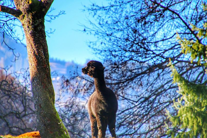Tree Bird Sky Low Angle View Nature Animal Themes Animals In The Wild No People Branch Tree Trunk One Animal Outdoors Day Bare Tree Perching