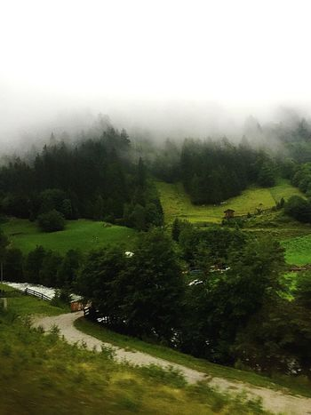 Tranquility Tranquil Scene Fog Landscape Weather Scenics Tree Austria Foggy Beauty In Nature Non-urban Scene Nature Solitude Mountain Green Color Growth Field Countryside Winding Road Plant
