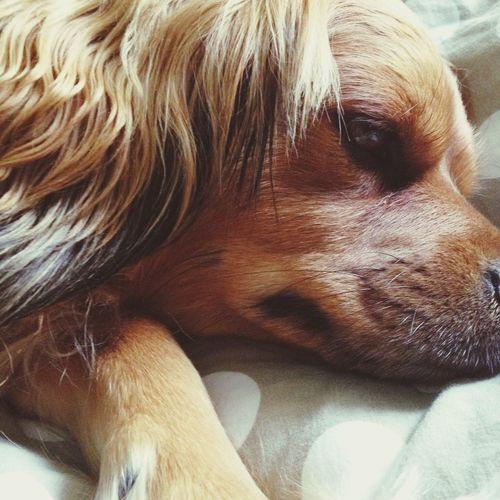 ❤️❤️ Taking Photos Enjoying Life Animal Dog
