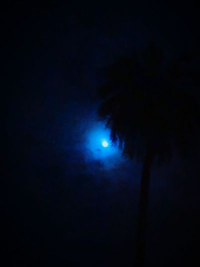 Night Moon Dark