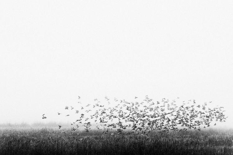 Flock of birds on a land