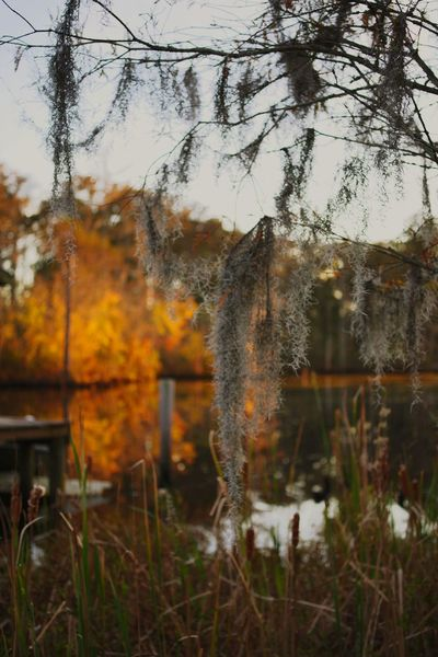Tree Reflection Nature No People Autumn Outdoors Beauty In Nature Reflection Bokehlicious EyeEm Nature Lover Dof_brilliance PENTAX K1 EyeEm Best Shots North Carolina Dof Nature Leaf 🍂 Autumn Creek Dof Bokeh Nature Focus On Foreground Water Grass Day Reflections