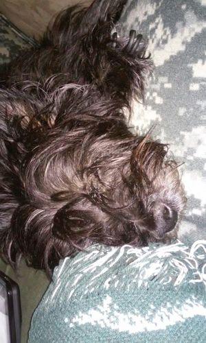 My Buddy Dog🐶 Love him soo much! Cute Pets