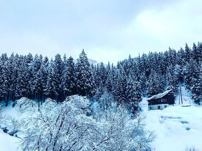 WHITE WORLD Snow Winter Cold Temperature Tree Nature Weather Beauty In Nature Scenics Sky Tranquility Tranquil Scene No People Covering Day Outdoors Building Exterior Mountain Architecture