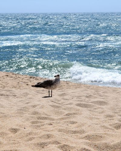 Beach Sea Sand Animal Themes One Animal Pets Animals In The Wild Animal Wildlife Sea Bird Horizon Over Water Beauty In Nature Bird Wave Day Travel Destinations Portugal Eyeemphotography Sunlight Tranquility Blue Sky Summer Vila Do Conde Seagull Water