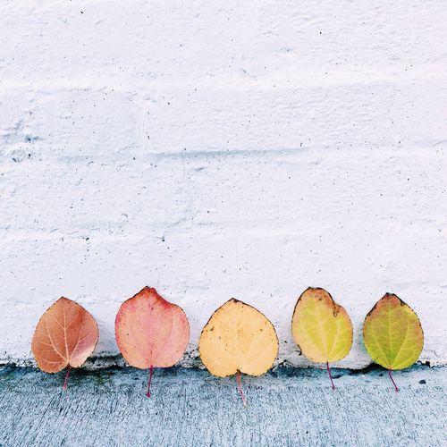 Autumn Leaves Eye4photography  Streetphotography