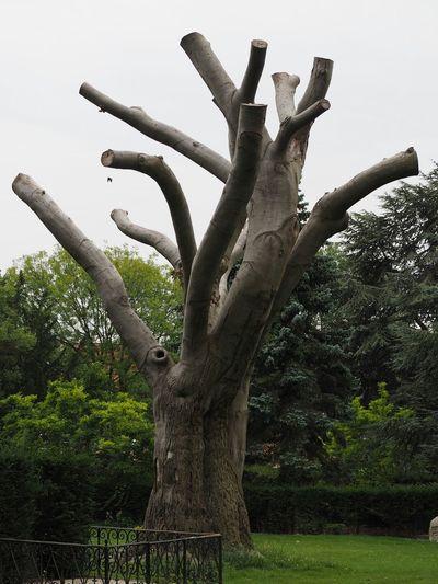Solbjerg Kirkegård Trees Treeart Dead Trees Cemetery Tree Sculpture Art Walking Around
