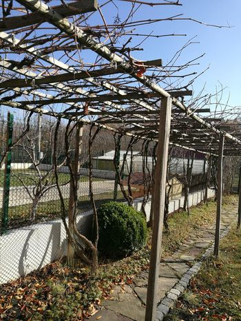 Tree Growth Nature Sunlight Day No People Outdoors Low Angle View Plant Built Structure Beauty In Nature Sky Branch Greenhouse Grape Yards Fall Beauty Fall Season Pavements Stone Walkway