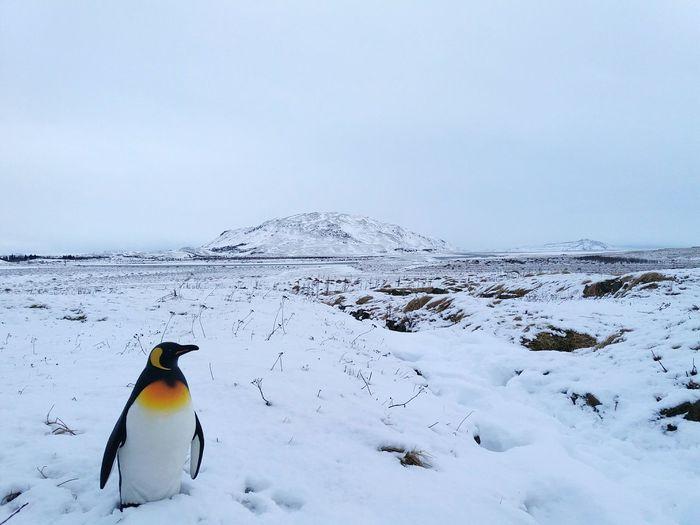 Penguin Snow Cold View Pretty Nature