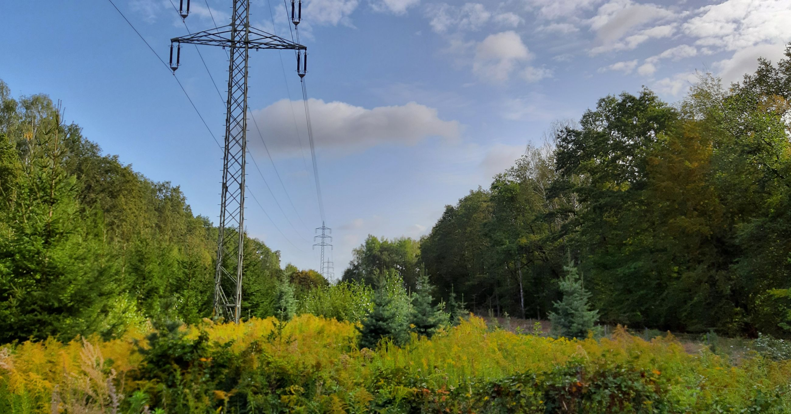 tree, plant, electricity, cable, electricity pylon, connection, technology, fuel and power generation, sky, power line, green color, no people, growth, power supply, nature, land, low angle view, day, beauty in nature, tranquil scene, outdoors, electrical equipment