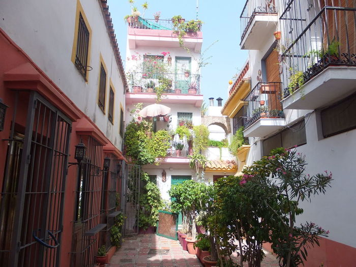Side Street Blue Sky Bushes Colourful Composition Day Full Frame Houses Marbella No People Outside Photography Perspective Plants Pretty Quiet Residential District Shadow SPAIN Sunlight Terraces Tranquility Whitewashed