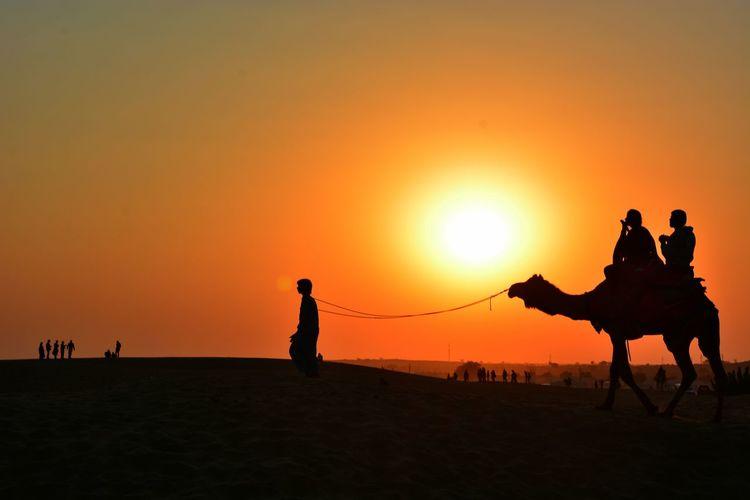 Service Animals Carmel Sunset Travel Photography NikonD7100 Rajasthan Jaisalmer Thar Desert