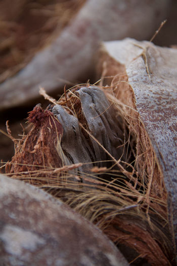 Close-up of dried nest on tree