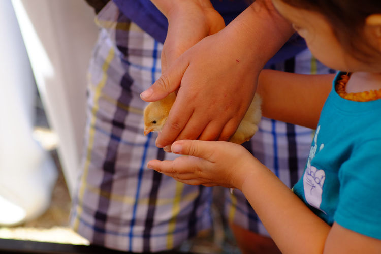 Cropped image of siblings holding baby chick