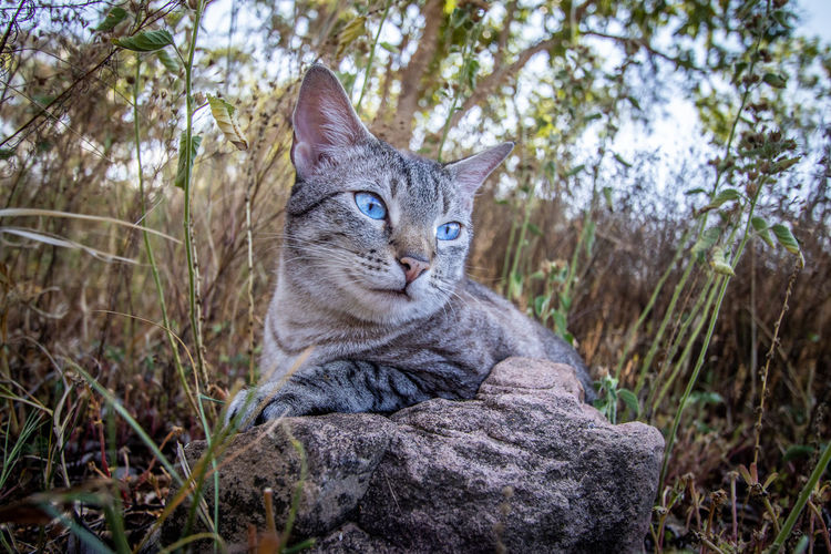 Portrait of a cat on land
