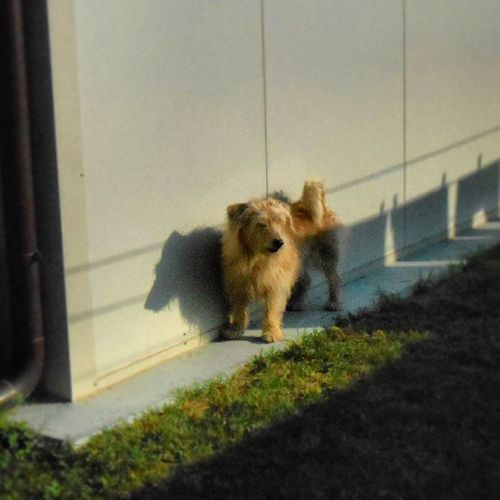 Chicco Piccolo Mio Dog batuffolosoblondafternoonlikesun