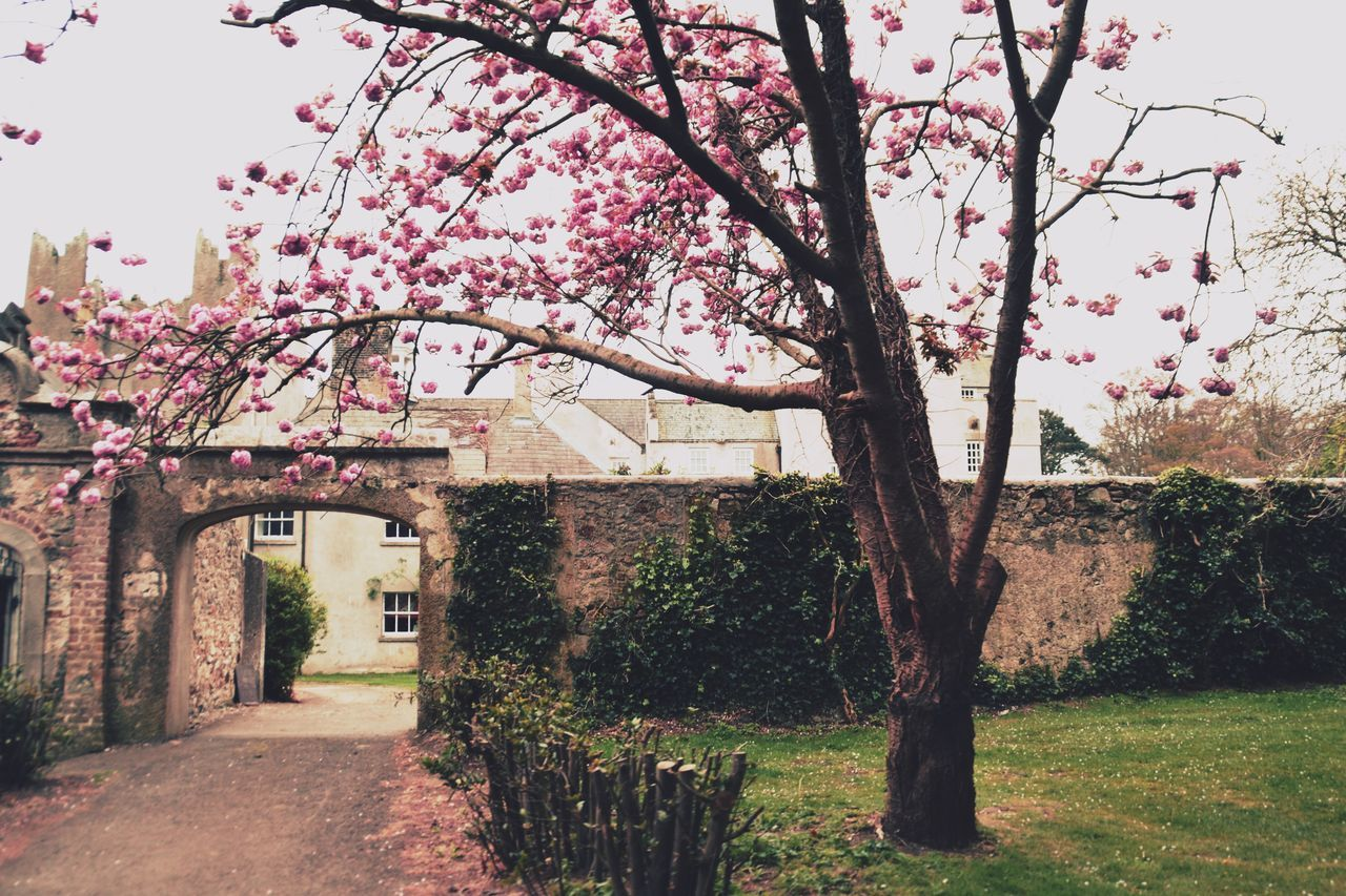 tree, architecture, nature, blossom, built structure, flower, branch, growth, building exterior, no people, beauty in nature, day, outdoors, fragility, springtime, sky, clear sky, freshness