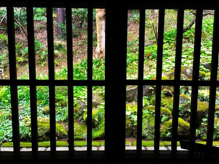 書斎の窓の風景。ランプだけの山小屋や宿に宿泊したことがあるけれど、電気がなくてもかなり明るいことに気がつく。 Silhouette_collection Silhouettes Silhouette Light And Shadow Landscape Spring Has Arrived Spring Is Coming  Green Green Color Kanagawa Sankeien Sankei-en Japanese Garden EyeEm Nature Lover Relaxing Relaxing Moments Japanese Culture Japanese Style Showcase April Spring