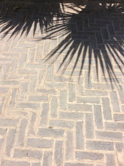Sommergefühle No People Strong Sunlight Palm shadow Herring Bone Brick Work Path Floor Very Old Bricks EyeEm Best Shots I Pad Photography I Pad Mini Palace Gardens Tehran July 2017 Historic Palm Trees City Life shadows on brick Pattern Iranian Iranian_photography Iranan Architecture Iran
