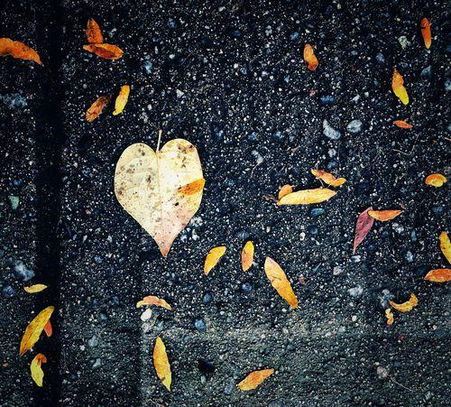 Autumn leaf on damp sidewalk Autumn Leaf Leaf Sidewalk Love Heart Shape Positive Emotion Emotion No People High Angle View Directly Above Day Nature