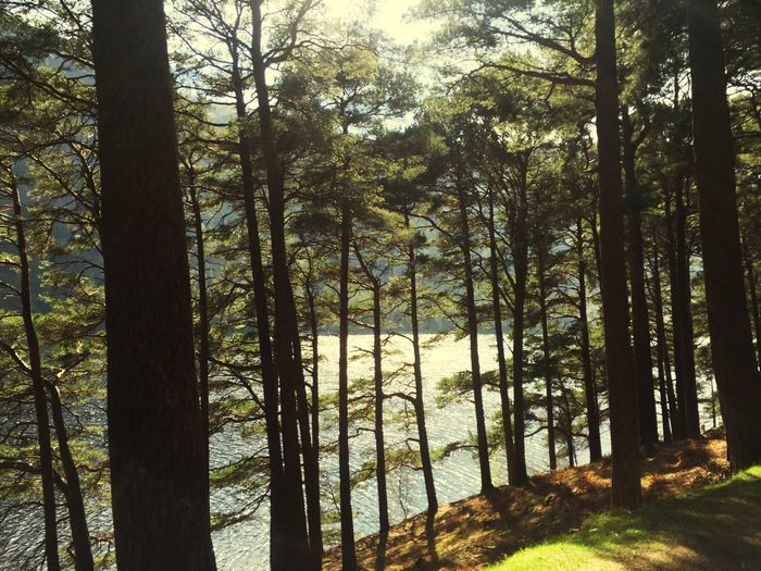Wicklow Glendalock Trees Lake Lake View Trees Sunny Day Great Day Out