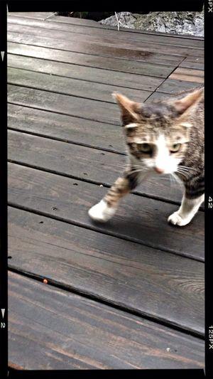 Cat Kitty Cat Cheese!