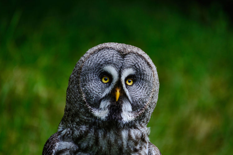 Close-up portrait of owl
