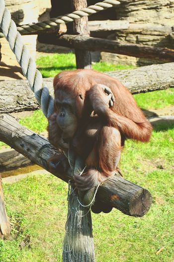 Taking Photos Monkey Hi! Hello World Moscow, Москва Russia россия Moscow Moscow Zoo ZOO-PHOTO Cheese! Russia Hello World Zoo Monkey Zoo