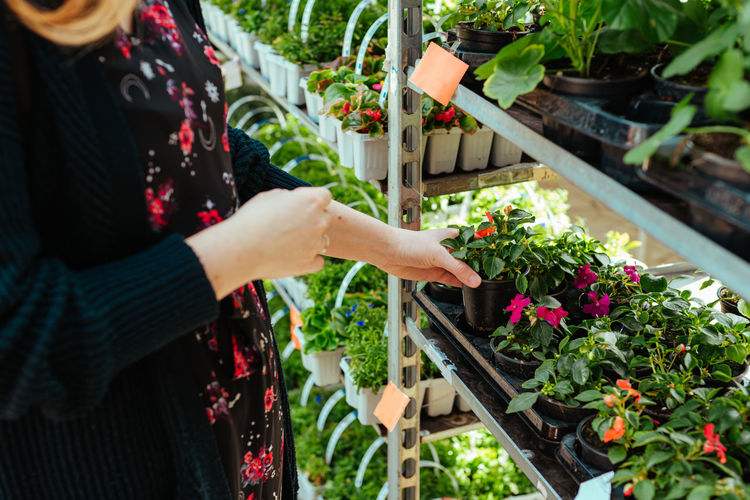 Midsection of woman holding flower pot at potted plants