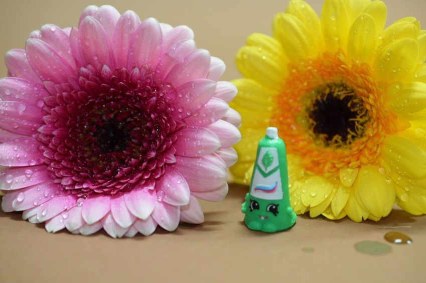 Macro Photography Macro Flowers Macro Toys Shopkins