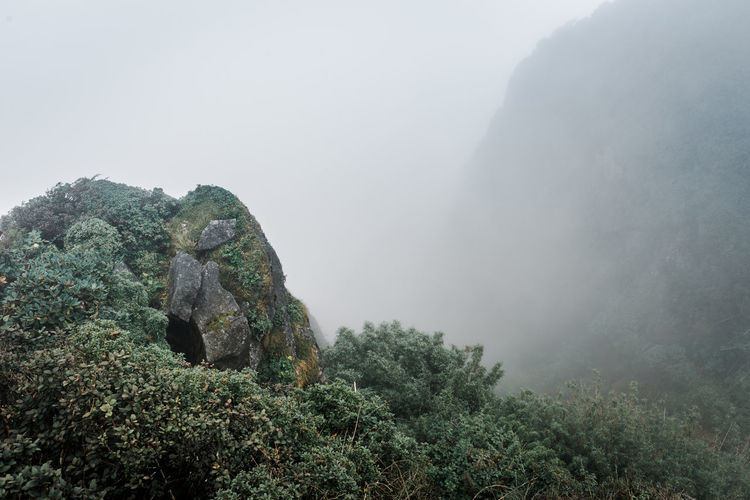 Sapa in winter Fog Beauty In Nature Plant Rock Tranquility Scenics - Nature Tranquil Scene Nature Mountain Rock - Object Tree No People Day Environment Solid Non-urban Scene Sky Land Rock Formation Outdoors Rainforest Mountain Peak