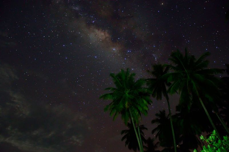 Low angle view of coconut palm trees against star field