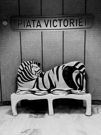 Subwayphotography Subway Train Subway Station Victoriei Subway Art Subway Stories Subway Tile Zebra Around The World Zebraline Zebraprint